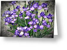 Purple Irises Greeting Card by The Art of Alice Terrill