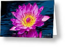 Purple Lily On The Water Greeting Card by Nick Zelinsky