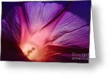 Purple... Greeting Card by Ludek Sagi Lukac