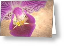Purple Orchid 1 Greeting Card by Rudy Umans