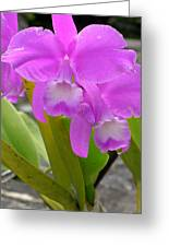 Purple Orchid Greeting Card by Mukta Gupta