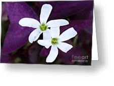 Purple Queen Flowers Greeting Card by Sabrina L Ryan