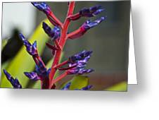 Purple Spike Bromeliad Greeting Card by Sharon Cummings