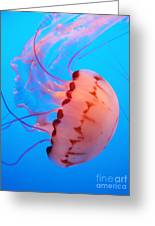 Purple Striped Jelly Fish 5d24931 Greeting Card by Wingsdomain Art and Photography