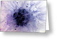 Purple Taraxacum Greeting Card by Tina M Wenger