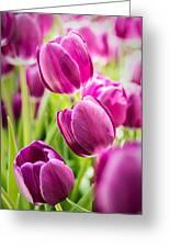 Purple Tulip Garden Greeting Card by  Onyonet  Photo Studios