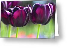 Purple Tulips Greeting Card by Heiko Koehrer-Wagner