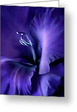Purple Velvet Gladiolus Flower Greeting Card by Jennie Marie Schell