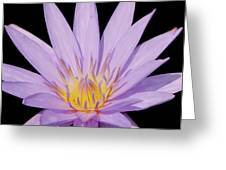 Purple Water Lily Greeting Card by Kim Hojnacki