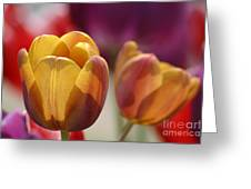 Purpleyellowtulips7016 Greeting Card by Gary Gingrich Galleries