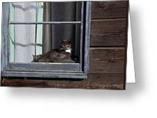 Purrfect Greeting Card by Kathy Bassett