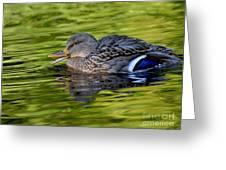Quack Greeting Card by Sharon Talson