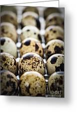 Quail Eggs Greeting Card by Elena Elisseeva