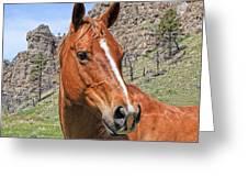 Quarter Horse Portrait Montana Greeting Card by Jennie Marie Schell