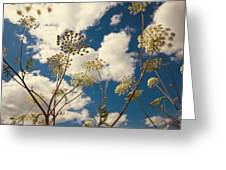 Queen Anne Lace And Sky I Greeting Card by Jenny Rainbow