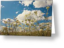 Queen Anne Lace and Sky Greeting Card by Jenny Rainbow