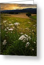 Queen Anne's Lace Greeting Card by Debra and Dave Vanderlaan