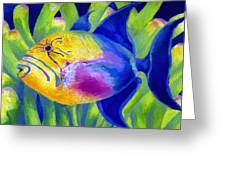Queen Triggerfish Greeting Card by Stephen Anderson