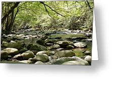 Quiet Place In The Smokies Greeting Card by Cheryl Hardt Art