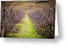 Quiet Vineyard Greeting Card by Mike Lee