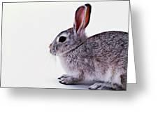 Rabbit 1 Greeting Card by Lanjee Chee