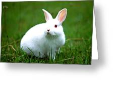 Rabbit On Grass Greeting Card by Lanjee Chee