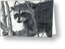 Raccoon - Charcoal Experiment Greeting Card by Joshua Martin