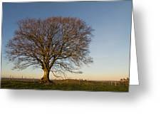 Raddon Hill Top Tree Greeting Card by Pete Hemington
