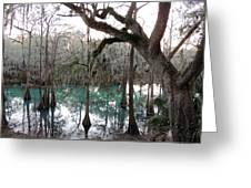Radium Springs Creek Greeting Card by Kim Pate