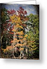 Raggedy Bayou Greeting Card by Lana Trussell