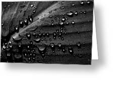 Rain Greeting Card by Bob Orsillo