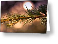 Rain Droplets On Pine Needles Greeting Card by Loriental Photography