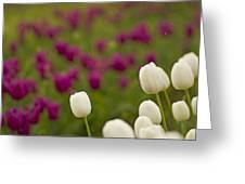 Rain Drops Keep Falling On My Tulips Greeting Card by Nick  Boren