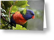 Rainbow Lorikeet 2 Greeting Card by Heng Tan