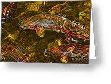 Rainbow Trout Greeting Card by Cari Gesch