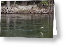 Rainbow Trout Jumping Way Out Of The Water Greeting Card by Scott Lenhart
