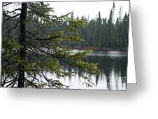 Raindrops On An Evergreen Greeting Card by Larry Ricker