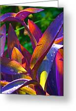 Raindrops On Colored Leaves Greeting Card by Margaret Saheed