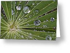 Raindrops On Lupin Leaf Greeting Card by Heiko Koehrer-Wagner