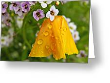 Rained Upon Greeting Card by Chris Berry