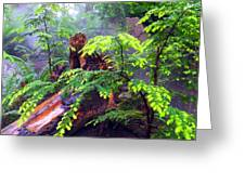 Rainforest Park In Vancouver British Columbia Greeting Card by Carol  Lux Photography