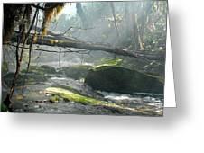 Rainforest Stream Greeting Card by Stefan Carpenter