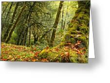 Rainforest Trunk Greeting Card by Adam Jewell