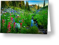 Rainier Wildflower Creek Greeting Card by Inge Johnsson