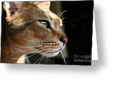 Ramses The Cat Greeting Card by Bobbie Nickey