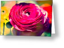 Ranunculus Squared Greeting Card by Sonja Quintero