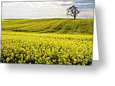 Rape Landscape With Lonely Tree Greeting Card by Heiko Koehrer-Wagner