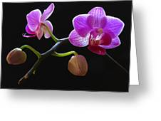 Rare Beauty Greeting Card by Juergen Roth