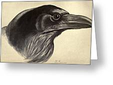 Raven Greeting Card by Philip Ralley