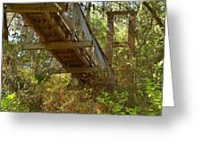 Ravine State Gardens Palatka Florida Greeting Card by Christine Till